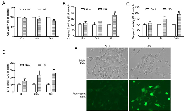 HG-induced injury, NLRP3 inflammasome activation and ROS production in HT22 hippocampal neurons.