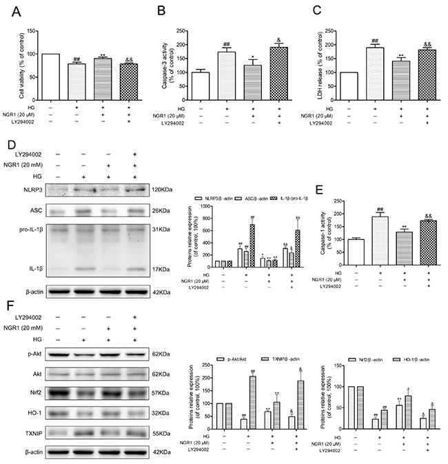 NGR1 exerts neuroprotective effects and inhibition of NLRP3 inflammasome by activating the Akt/Nrf2 pathway.
