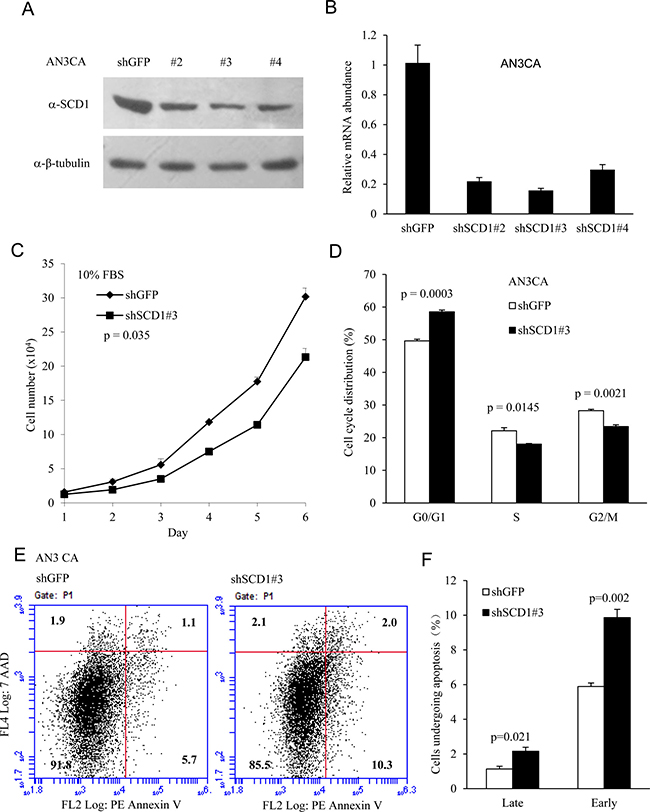 SCD1 is required for cell proliferation in endometrial cancer cells.