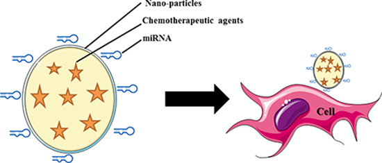 Schematic illustration of the nanoparticle based systemic delivery of miRNA and chemotherapeutic agents to the cell.