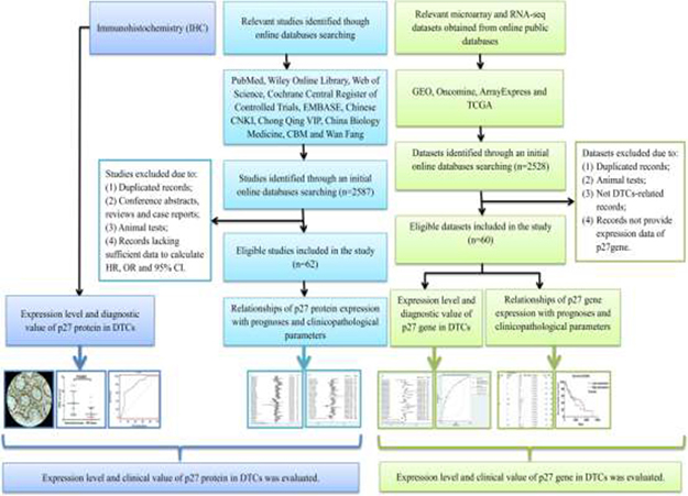 Flow chart of the overall design of the current study.