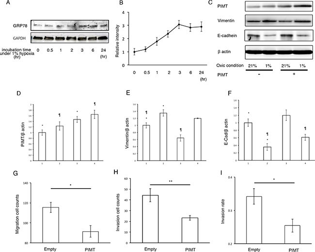 Supplemental expression of PIMT reduces EMT and cancer invasion in A549 cells induced by hypoxic conditions.
