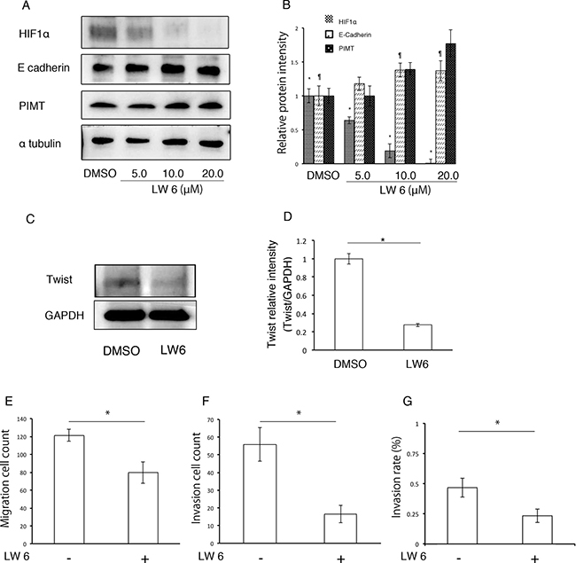 HIF1α inhibitor decreases EMT and cancer invasion in A549 cells induced by inhibition of PIMT expression.