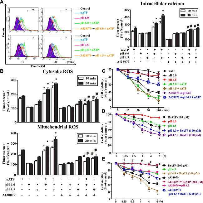 Coordinated effects of P2X7 and acidification on intracellular calcium and ROS.