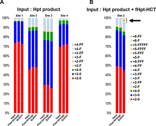Affinity chromatography with the 10-7G mAb followed by site-specific analyses of N-glycans on haptoglobin by mass spectrometry.