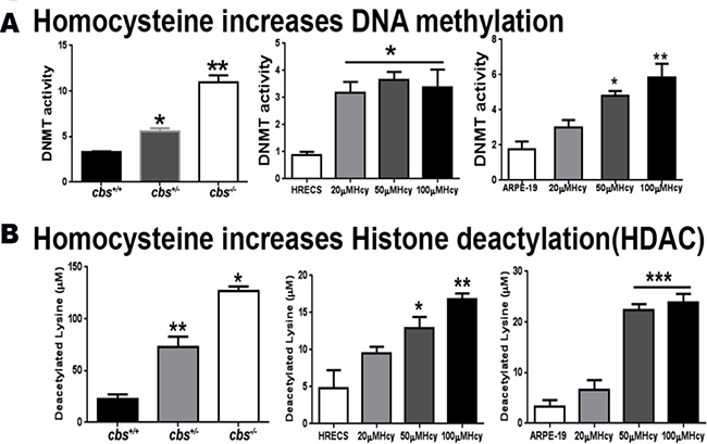 Assessment of DNA methylation and histone deacetylation.