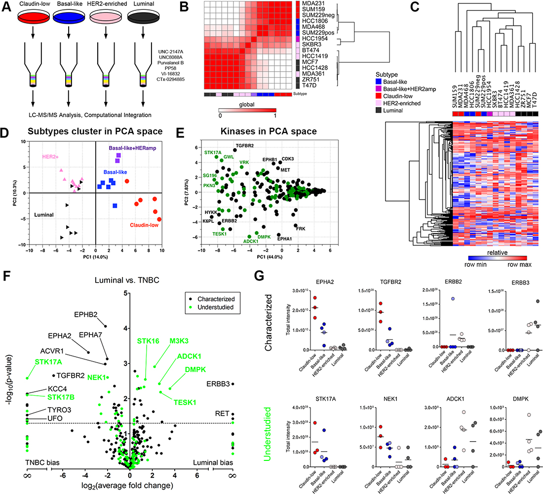 MIB/MS kinome profiling assigns breast cancer cell lines to functional subtypes.