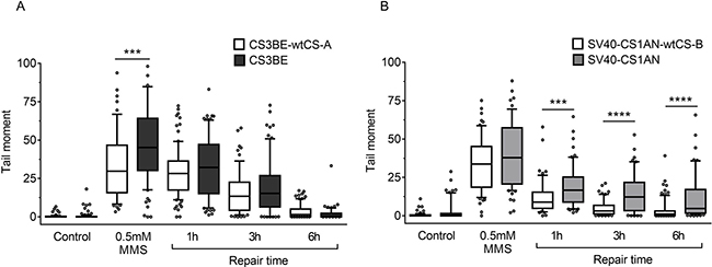 Evaluation of DSB formation and repair in CS-A and CS-B cells after MMS exposure.