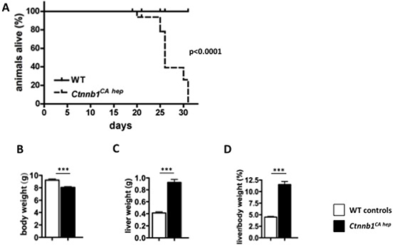 Continuous β-catenin signaling in hepatocytes results in 100% mortality and hepatomegaly.