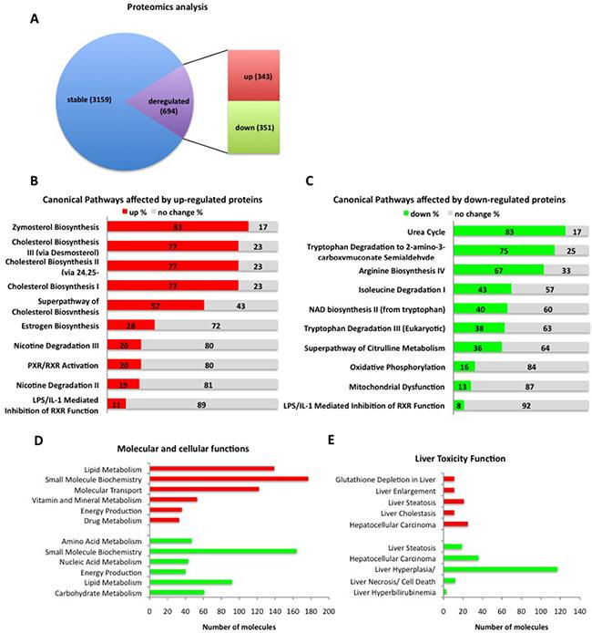 Ctnnb1CA hep mice have severe disturbances in protein composition.