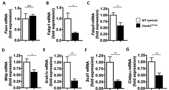 Ctnnb1CA hep mice display deregulation of key enzymes of lipid metabolism.
