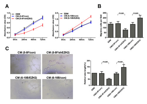 EZH2 enhanced HUVEC proliferation, migration and tubule formation.