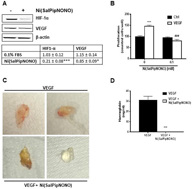Ni(SalPipNONO) has antiangiogenic activities.