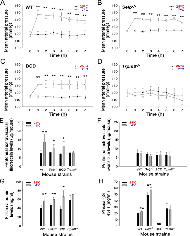Cold-induced hypertension is associated with the elevation of small-molecule extravasation and increased plasma albumin and immunoglobulin G (IgG) levels.