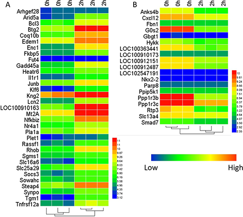 Oncotarget | In silico analysis of expression data during