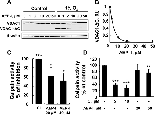 AEP inhibitor inhibits VDAC1-ΔC formation.