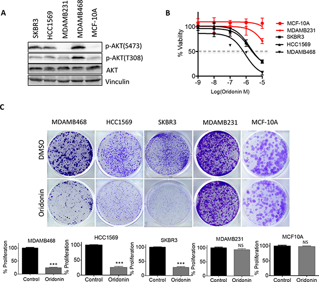 Oridonin selectively impairs cell growth and tumorigenesis in breast cancer with hyperactivation of AKT signaling.