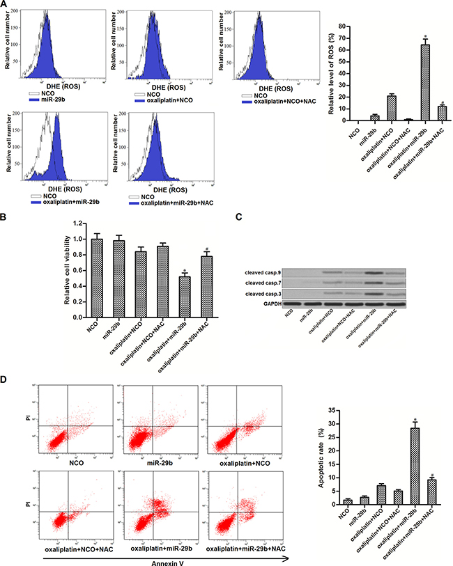 MiR-29b promoted oxaliplatin-induced apoptosis through the ROS pathway in OR-SW480 cells.