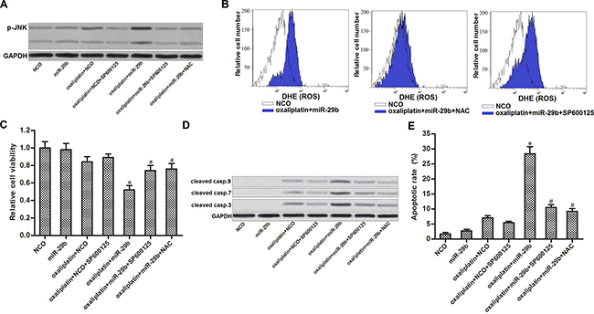 JNK is the downstream of ROS in apoptosis pathway of OR-SW480 cells co-treated with oxaliplatin and miR-29b.