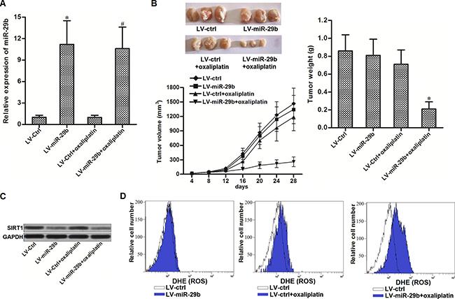 Overexpression of miR-29b reversed oxaliplatin-resistance in vivo.
