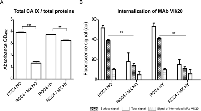CA IX localisation and internalisation of VII/20 antibody in uninfected and infected cells.