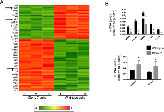 SELENOK deficiency alters transcriptional control of growth, migration and stemness.