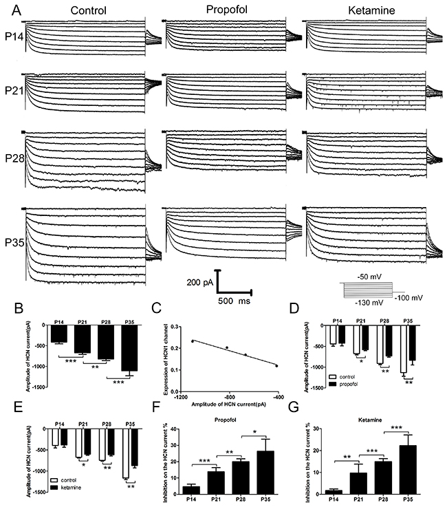 HCN current and the effects of propofol and ketamine on the HCN current in cortical pyramidal neurons increased with the development of mice.