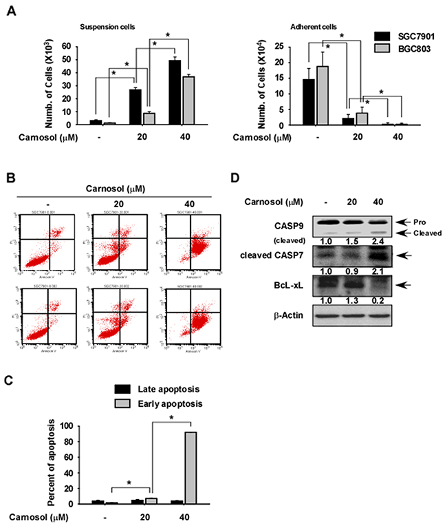 Effect of carnosol on gastric cancer cell apoptosis.