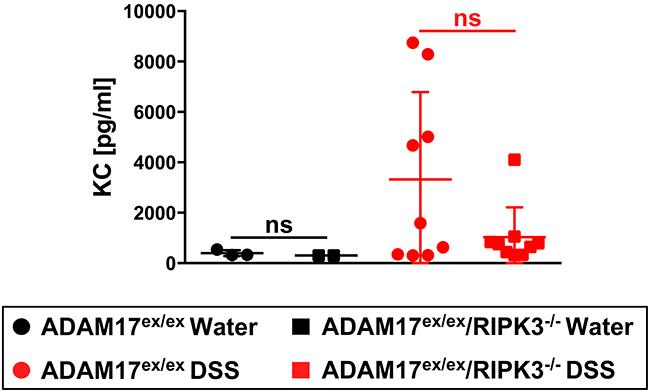 Impact of acute colitis on KC serum levels in ADAM17ex/ex and ADAM17ex/ex/RIPK3-/- mice.