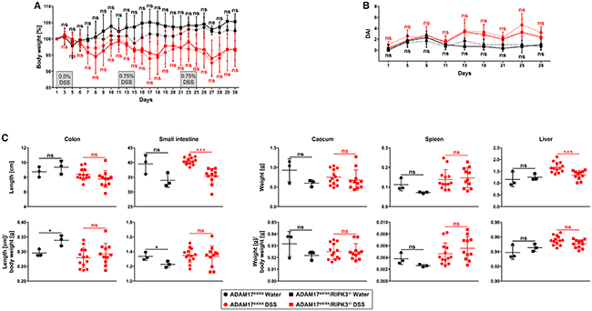 Deletion of RIPK3 does not affect loss of body weight, disease activity index, and changes of inner organs caused by chronic DSS-induced colitis in ADAM17 hypomorphic mice.
