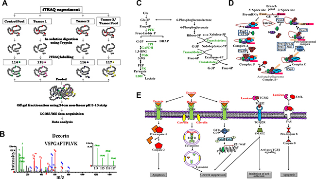 Quantitative proteomic analysis of human colon adenocarcinomas and the significantly altered metabolic pathway.
