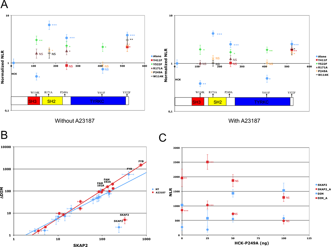 Impact of HCK mutations on SKAP2 interactions.