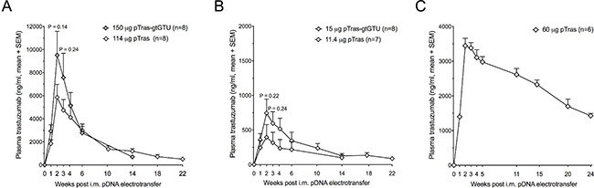 Added value of the gtGTU plasmid for trastuzumab gene transfer in immune-compromised mice.