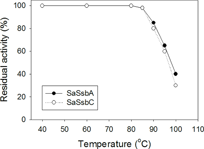 The thermostability of SaSsbC.