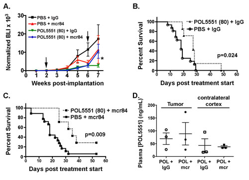 HD-POL5551 blocks brain tumor growth and increases survival