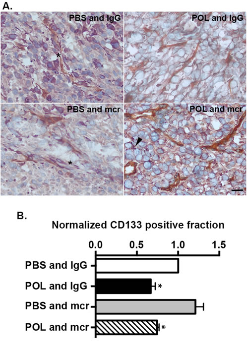 HD-POL5551 reduces the GBM stem cell fraction