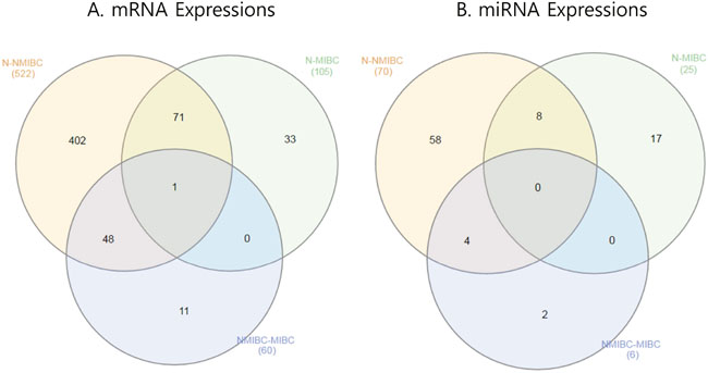Venn diagram showing mRNAs and miRNAs differentially expressed in BC.