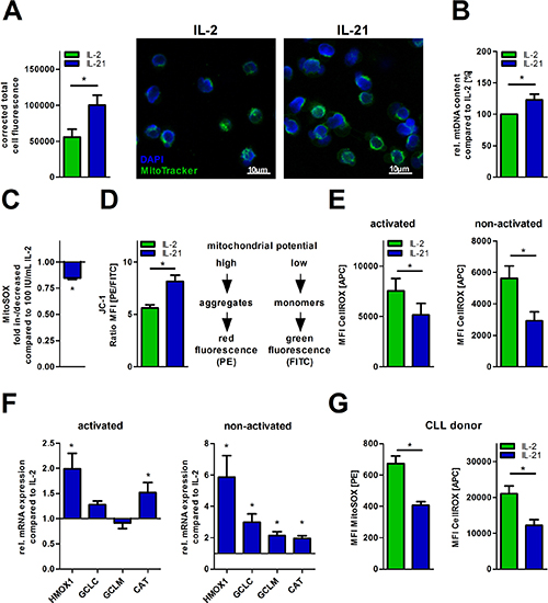 IL-21 increases mitochondrial biogenesis and fitness.