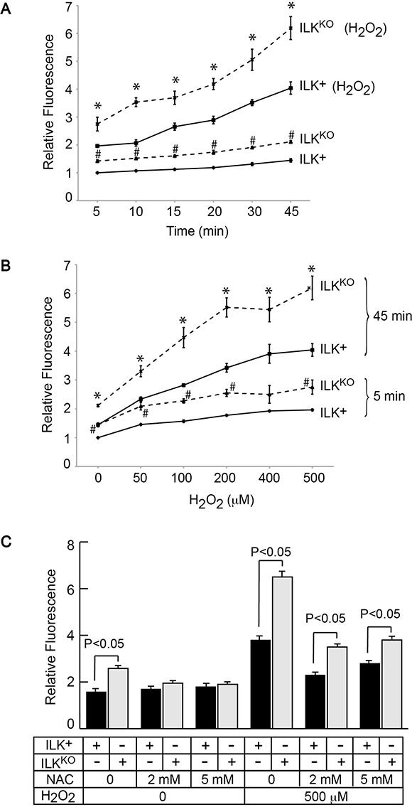Increased intracellular oxidant species in ILKKO keratinocytes.