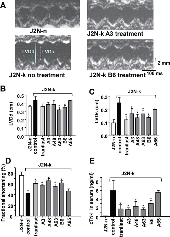 Protective effects of TRPV2 inhibitors against cardiac dysfunction in J2N-k hamsters.