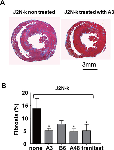 Suppression of fibrosis in the hearts of cardiomyopathic hamsters by TRPV2 inhibitors.