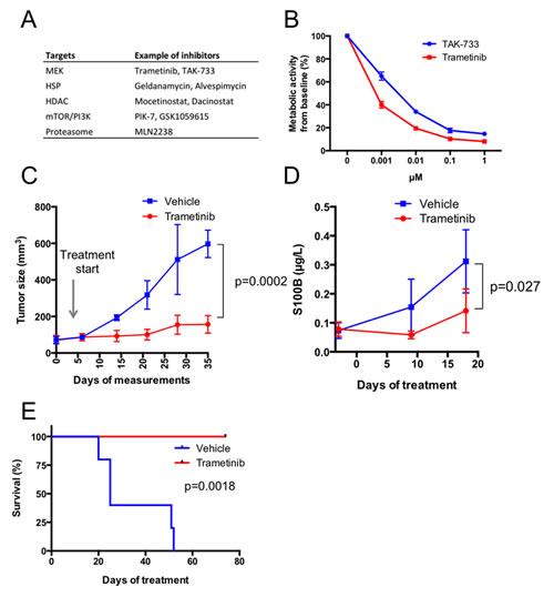 Melanoma cells from case 1 (patient M120903) respond to MEK inhibitors