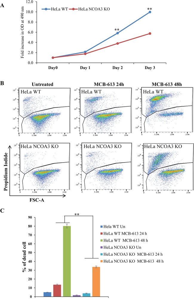 NCOA3-deficient HeLa cells are resistant to MCB-613 mediated cell death.