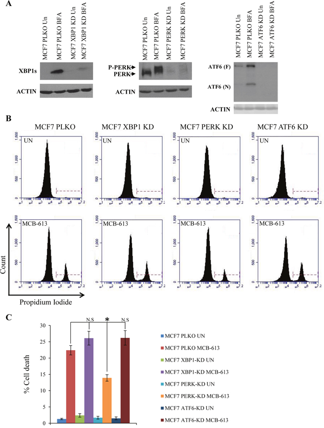 MCB-613 induces PERK dependent cell death.