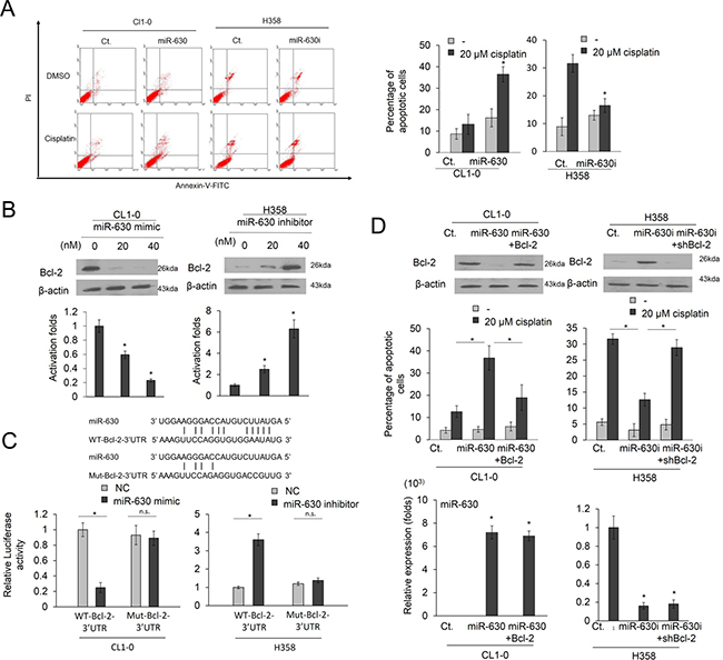 Low miR-630 expression may confer cisplatin resistance and promote colony formation by de-targeting Bcl-2.
