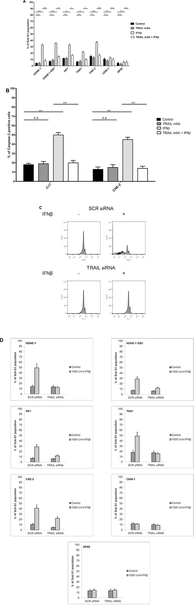 Inhibition of TRAIL inhibits IFNβ-induced apoptosis in NPC cells.