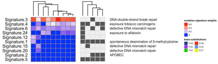 Mutation patterns were defined for each tumor sample using inferred exome sequencing mutations.