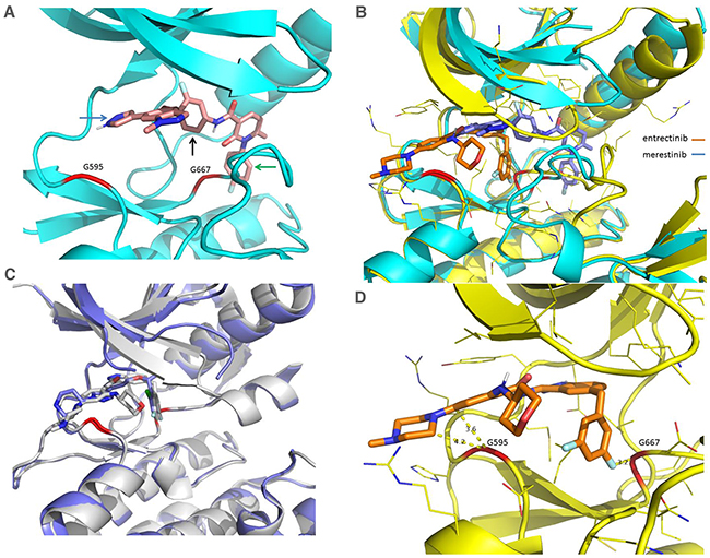 Comparison of X-Ray crystal structures of NTRK1 bound to merestinib and entrectinib, and structures of ALK bound to entrectinib and crizotinib.