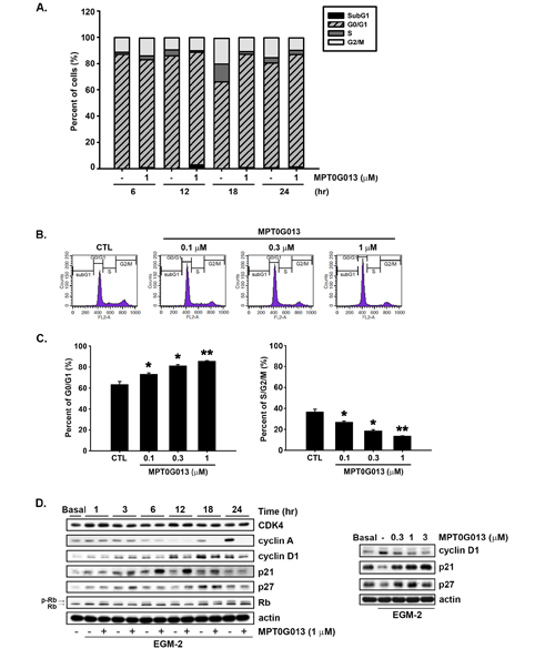 MPT0G013 induces cell cycle arrest in the G0/G1 phase.