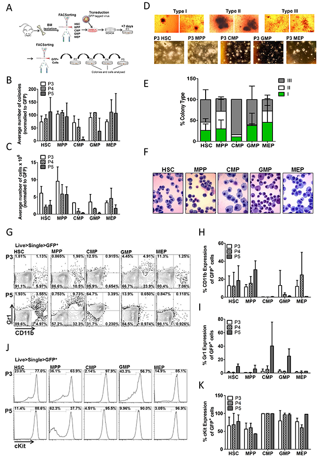 Oncotarget | Trib2 expression in granulocyte-monocyte progenitors